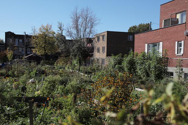 Jardin communautaire saint denis montreal - Table jardin hexagonale saint denis ...